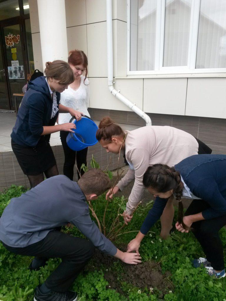 Высадка деревьев в школе